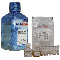 VascuLife® VEGF-Mv Endothelial